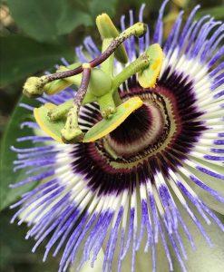 Eye of the Flower