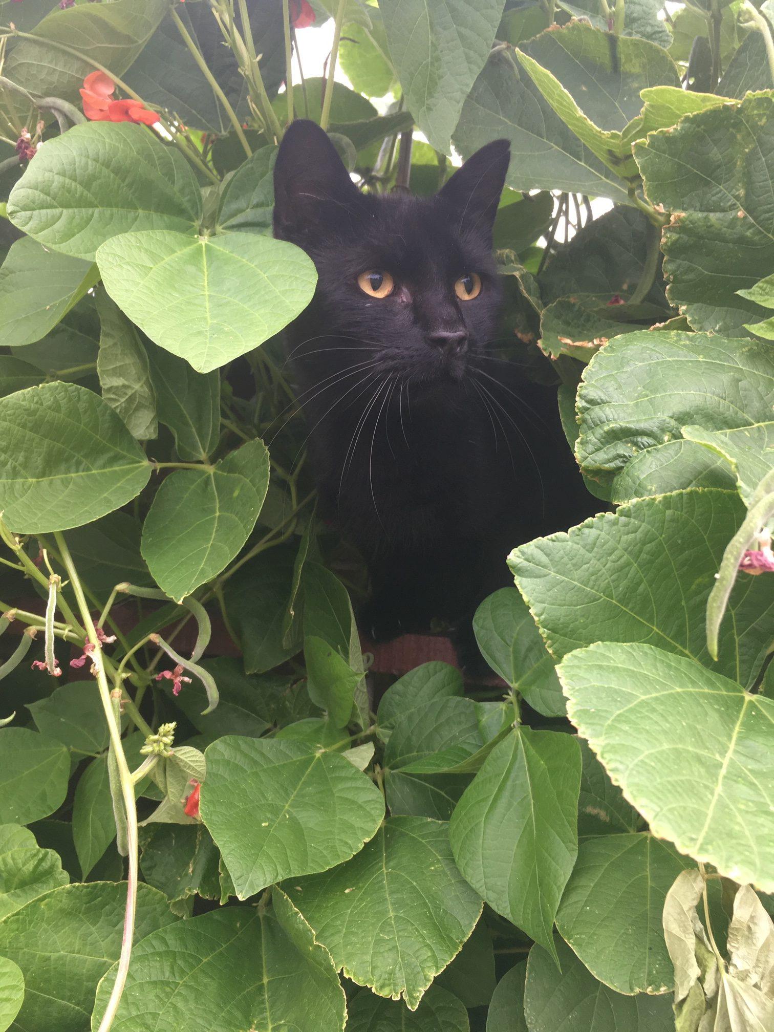 The Purr-fect Hiding Place