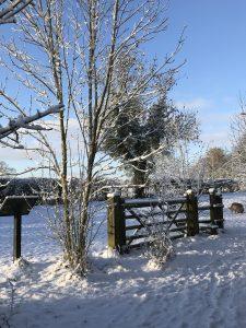 Snowy Fosse Meadows