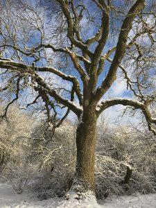 Fosse Meadows Tree